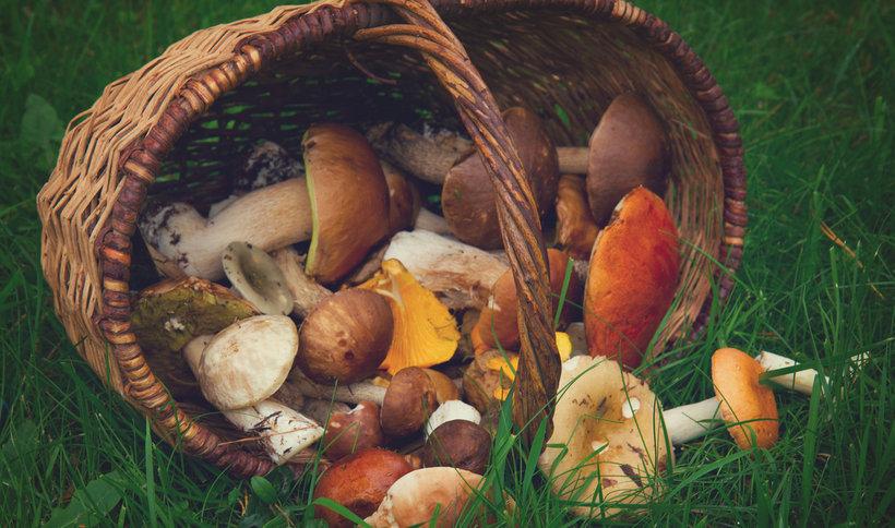 kosz-pelen-grzybow-368951-article